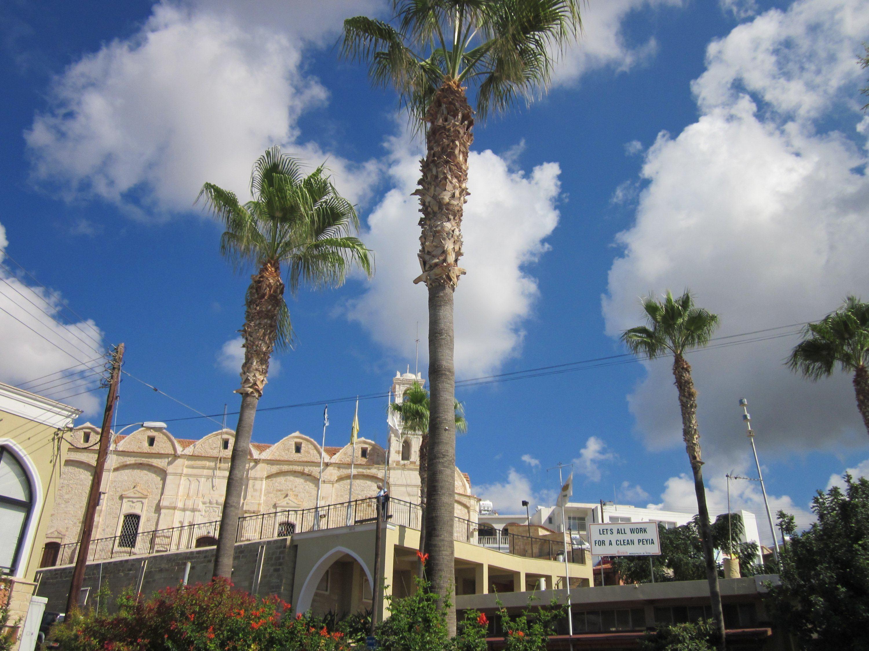 экзотические пальмы